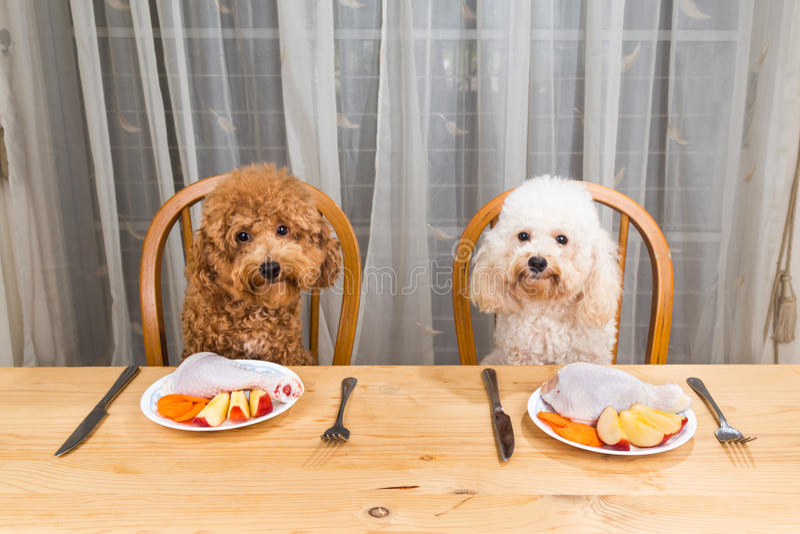 Conceito dos cães entusiasmado que têm a refeição de carne crua deliciosa na tabela imagem de stock royalty free