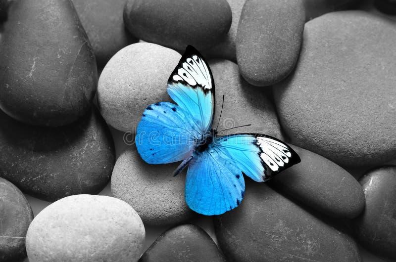 Conceito dos termas com as pedras da borboleta e do zen imagem de stock