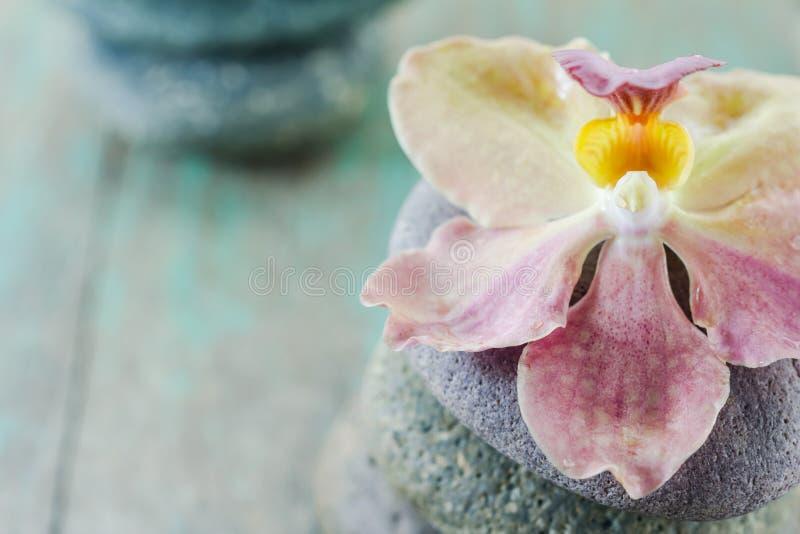 Conceito dos termas com pedras e orquídea do zen imagem de stock royalty free