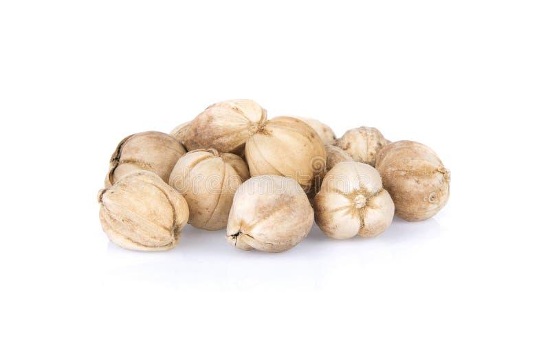 Conceito exótico Sião orgânico das especiarias ou vagens tailandesas do cardamomo no whit foto de stock