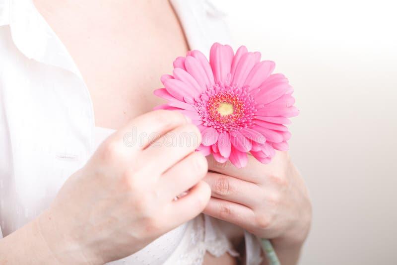 Conceito fêmea dos freshnes, gerbera cor-de-rosa da flor à disposição foto de stock royalty free