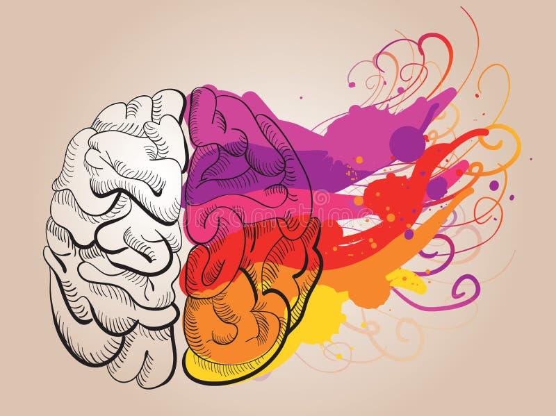 Conceito - faculdade criadora e cérebro ilustração royalty free