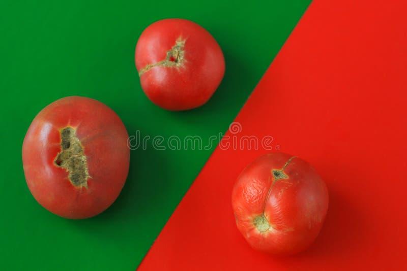Conceito feio do alimento, tomates deformados no fundo vermelho, espaço da cópia, imagem criativa do duotone fotos de stock