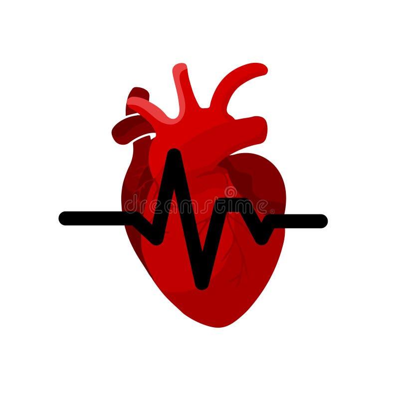 Conceito médico do órgão do coração com ícone dos tubos e das veias no fundo branco Cardiograma do sistema do coração ilustração stock
