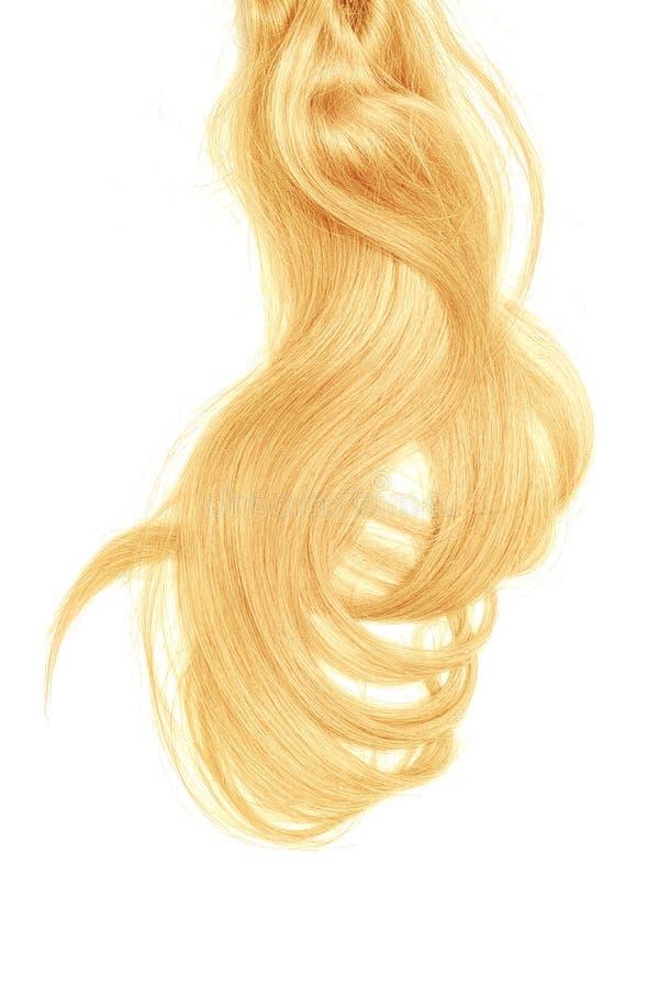 Conceito mau do dia do cabelo Rabo de cavalo longo, louro, bagunçado imagens de stock