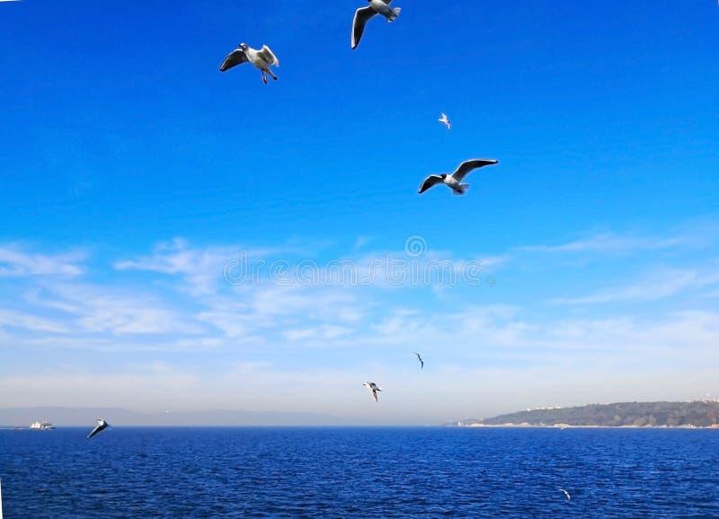 Conceito natural e animal Muitas gaivotas estão voando felizmente dentro imagens de stock
