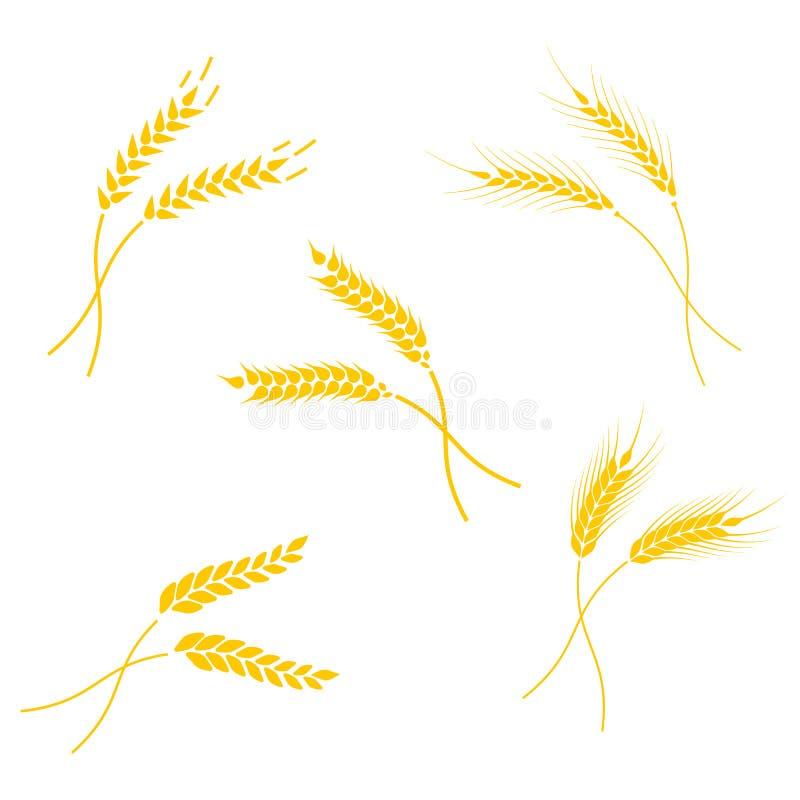 Conceito para produtos orgânicos etiqueta, colheita e cultivo, grão, padaria, alimento saudável ilustração do vetor