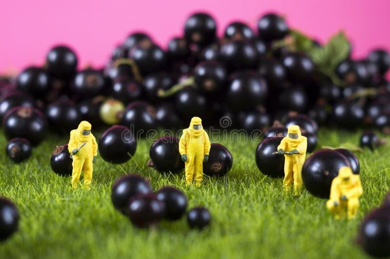 Conceito poluído de GMO, químico ou radioativo do alimento fotos de stock royalty free