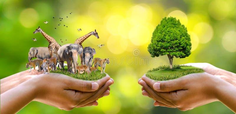 Conceito reserva natural conservação do tigre da reserva de vida selvagem Deer Global Warming Food Loaf Ecology Mãos humanas prot imagens de stock