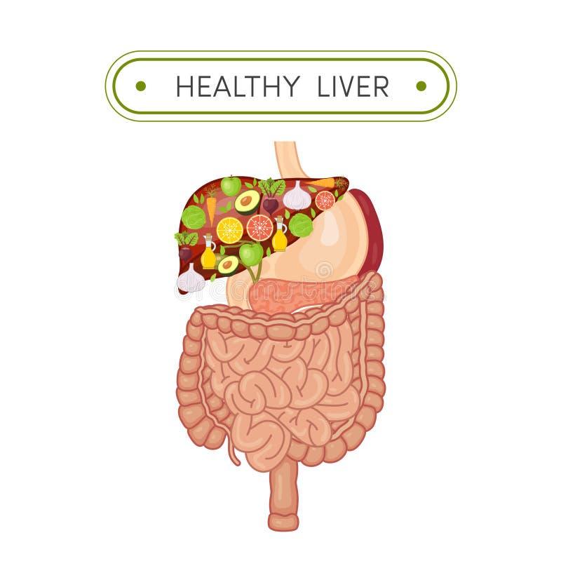 Conceito saudável do fígado ilustração royalty free