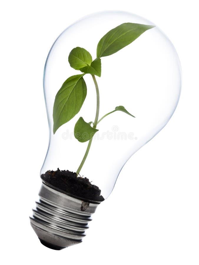 Conceito sustentável da energia imagens de stock royalty free