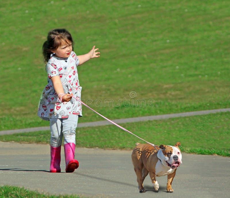 Conceito transversal do perigo do cão da raça foto de stock
