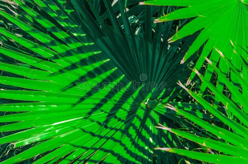 Conceito tropico mínimo folhas do close up do palma foto de stock