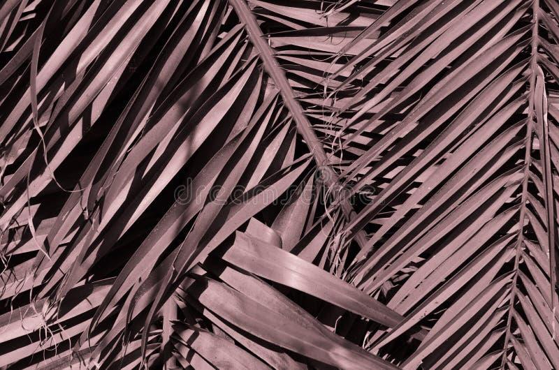 Conceito tropico mínimo folhas do close up do palma fotos de stock