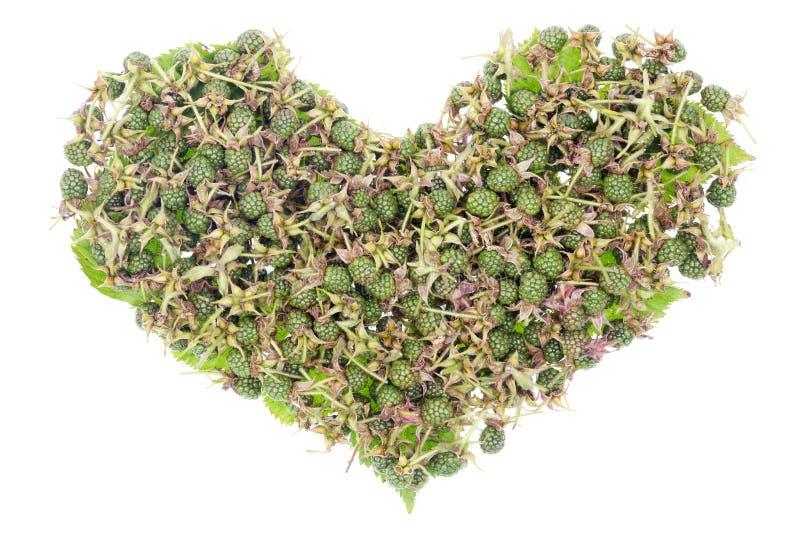 Conceito unripe verde do coração das amoras-pretas foto de stock royalty free