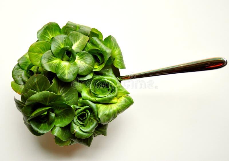 Conceito verde da dieta da folha com salada fresca da chicória fotos de stock