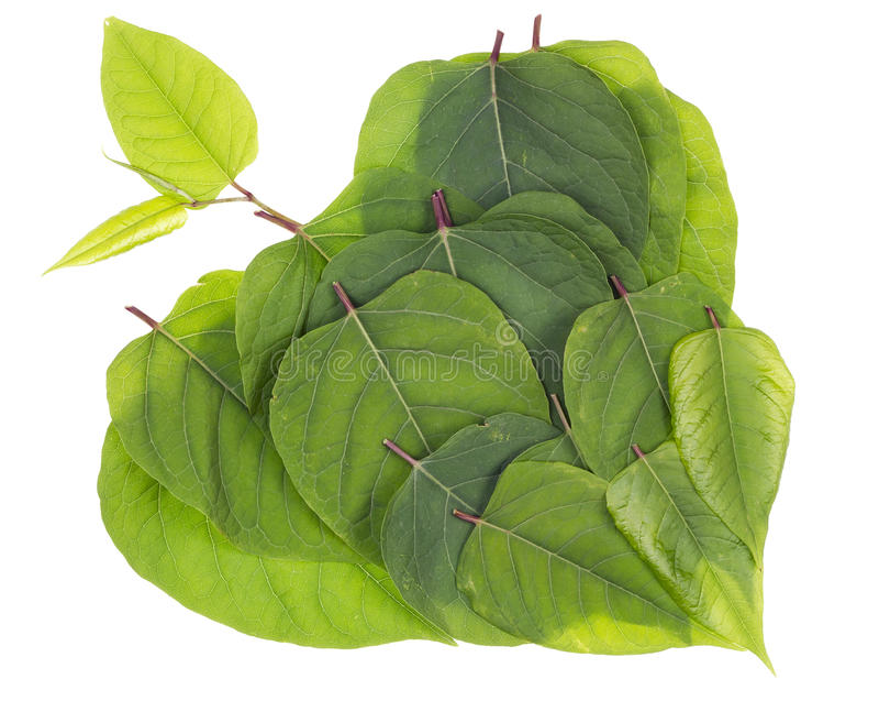 Conceito verde do coração da natureza fotos de stock royalty free