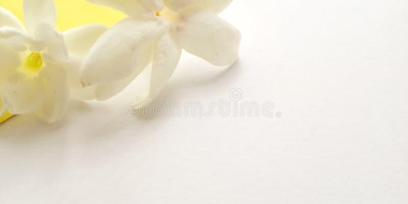 Conceito, vista superior, fundo branco próximo com Jasmine Petal, projeto do elemento para a mensagem, citações, colocação do tex fotos de stock