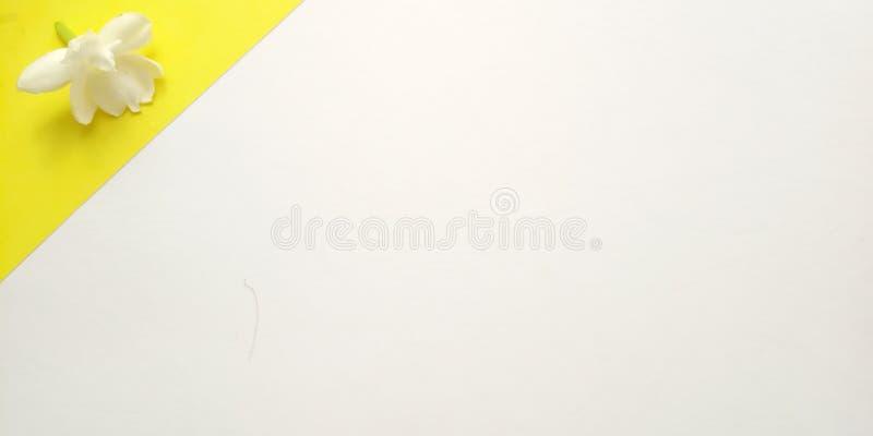 Conceito, vista superior, fundo branco próximo com Jasmine Petal, projeto do elemento para a mensagem, citações, colocação do tex foto de stock