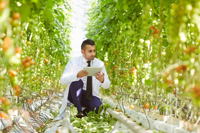 Concentrated biologist checking data on tablet stock image