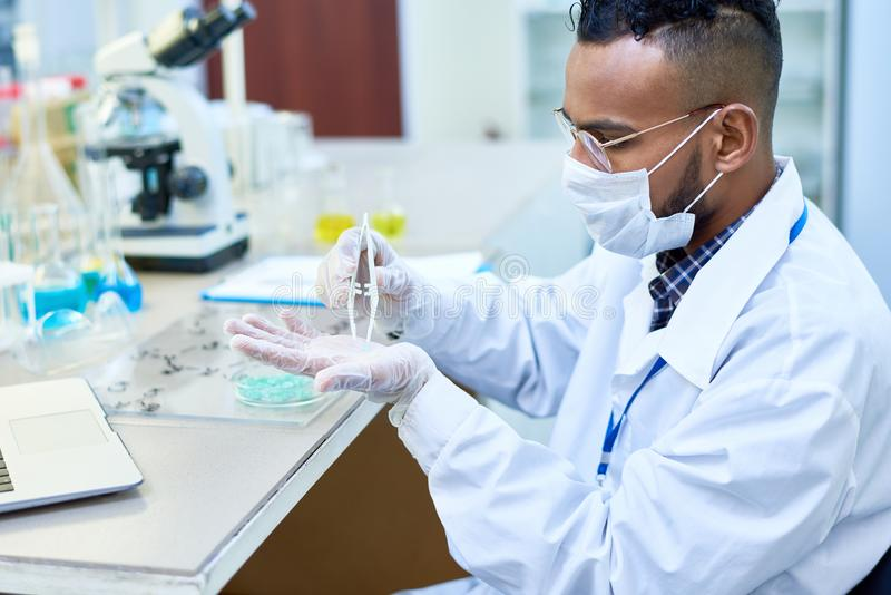 Concentrated handsome chemist analyzing medical sample royalty free stock images