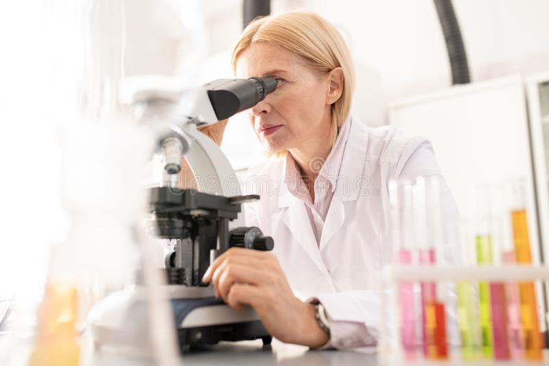 Concentrated lady working with microscope. Serious concentrated mature lady in white coat working with microscope while doing scientific research in laboratory royalty free stock image
