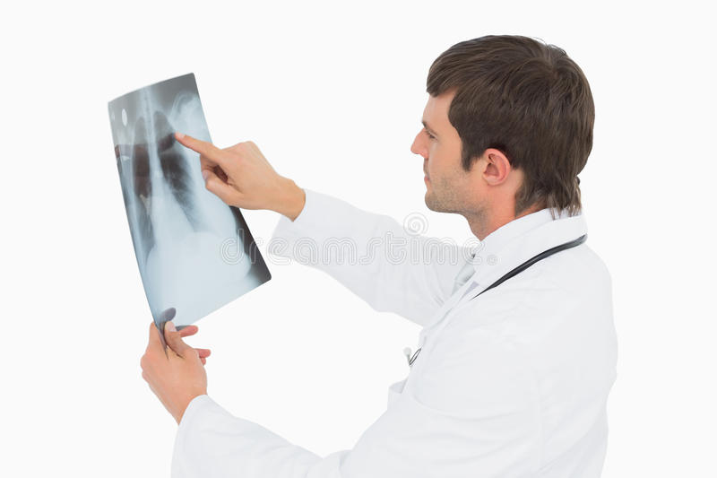 Concentrated male doctor looking at xray picture of lungs. Side view of a concentrated male doctor looking at xray picture of lungs over white background royalty free stock photography