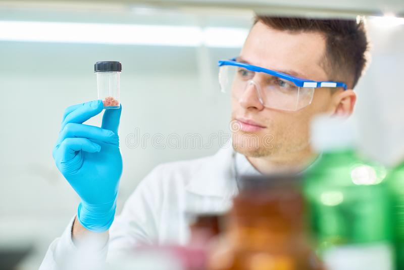 Handsome Scientist with Cultured Meat Sample. Concentrated young scientist wearing safety goggles and rubber gloves holding bottle with sample of cultured meat stock photography
