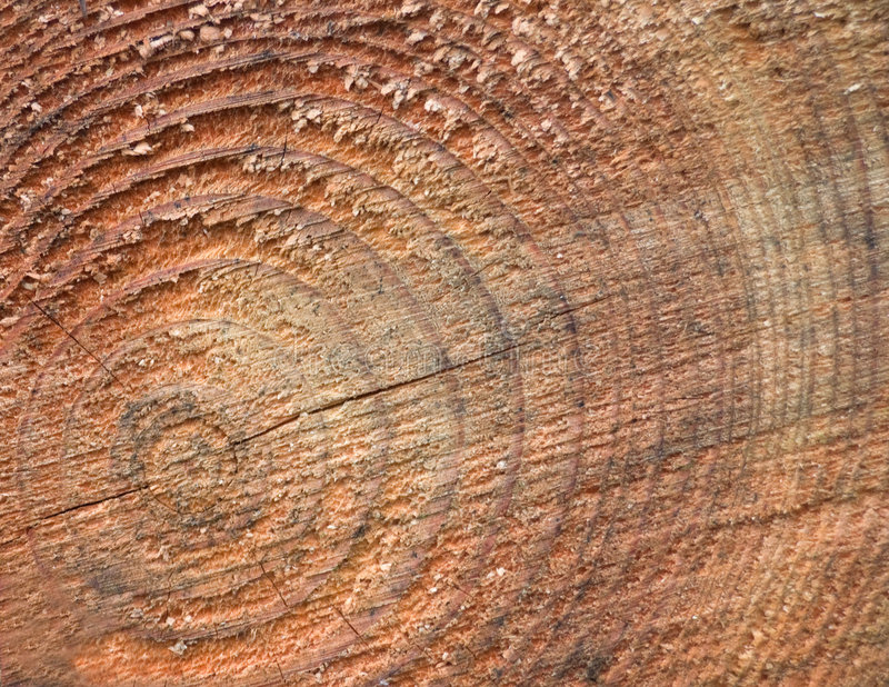 Download Concentric rings on a log stock photo. Image of texture - 4204534