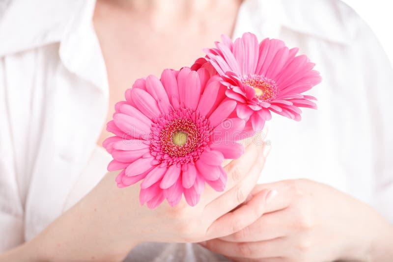 Concepção da higiene da mulher Gerbera cor-de-rosa da flor nas mãos fêmeas fotos de stock