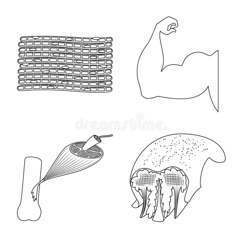 Concepção vetorial de fibras e logótipo muscular Conjunto de ilustrações do vetor de existências de fibra e de corpo ilustração do vetor