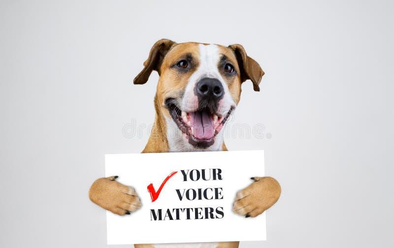 Concept américain d'activisme d'élection avec le chien de terrier du Staffordshire Le terrier drôle de pitbull se tient photographie stock