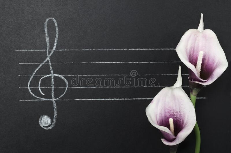 Concept of beautiful melody and music. Top view of free staff, g-clef and flowers on the black surface. Concept of learning how to compose music. G-clef, empty stock photos