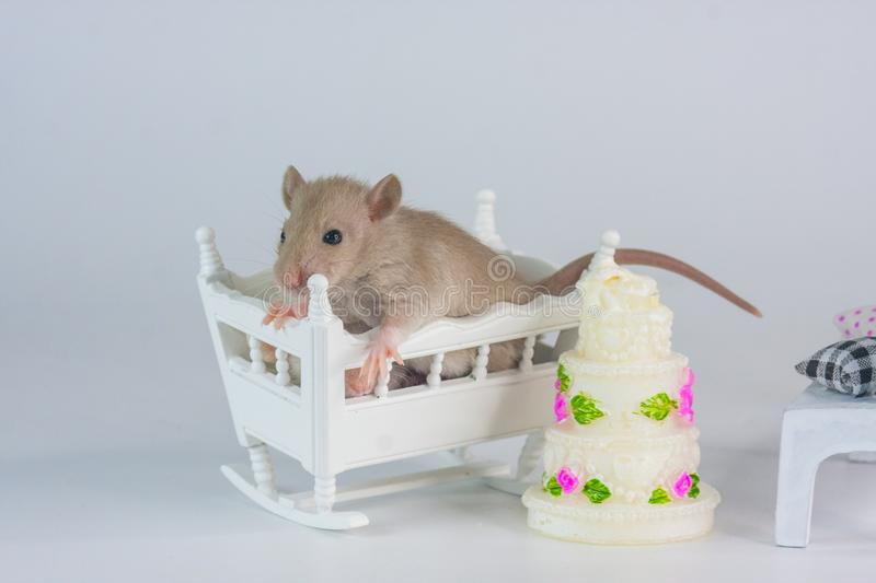 Concept of birth. Mouse on a festive background. stock photography