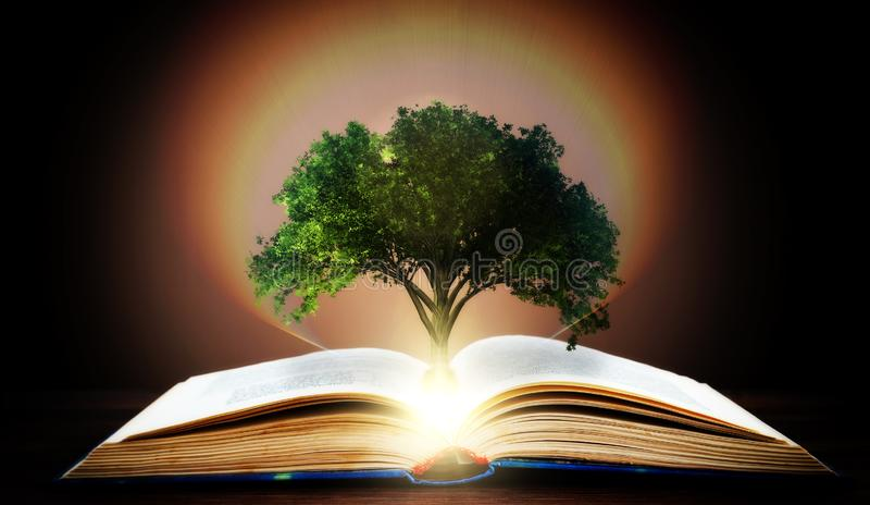 Book or tree of knowledge concept with tree growing from an open book royalty free illustration