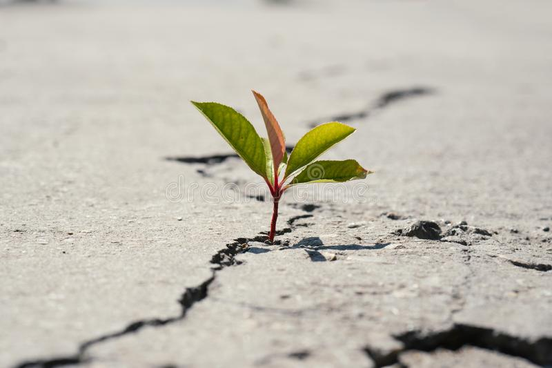 One green young seed of tree growing from cracks of asphalt road. Environment concept royalty free stock images