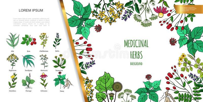 Concept coloré d'herbes médicinales tirées par la main illustration stock