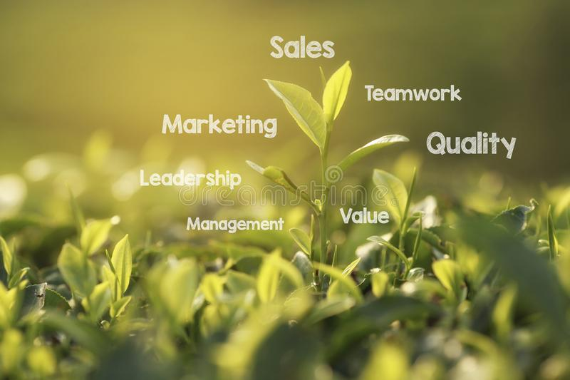 Concept or conceptual green tree business or marketing word cloud tagcloud. royalty free stock images