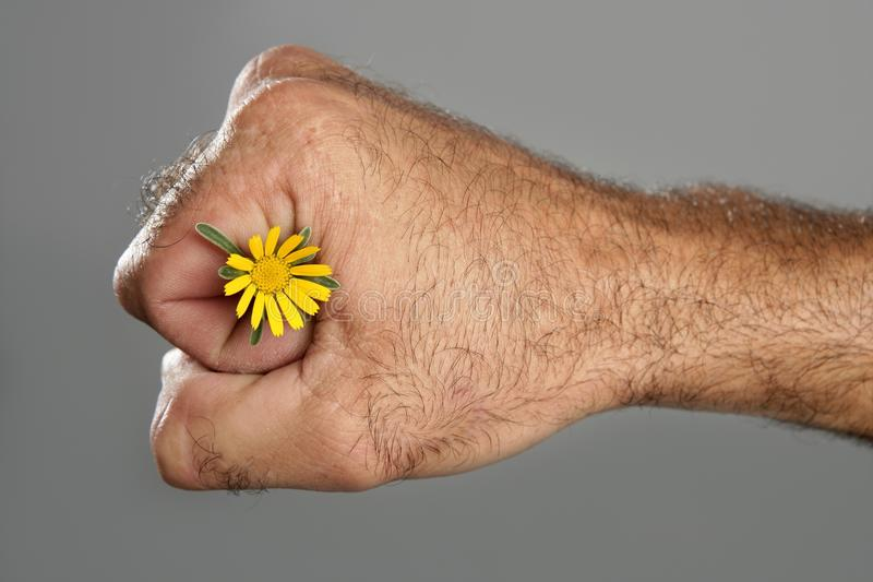 Download Concept And Contrast Of Hairy Man Hand And Flower Stock Photo - Image: 10986922
