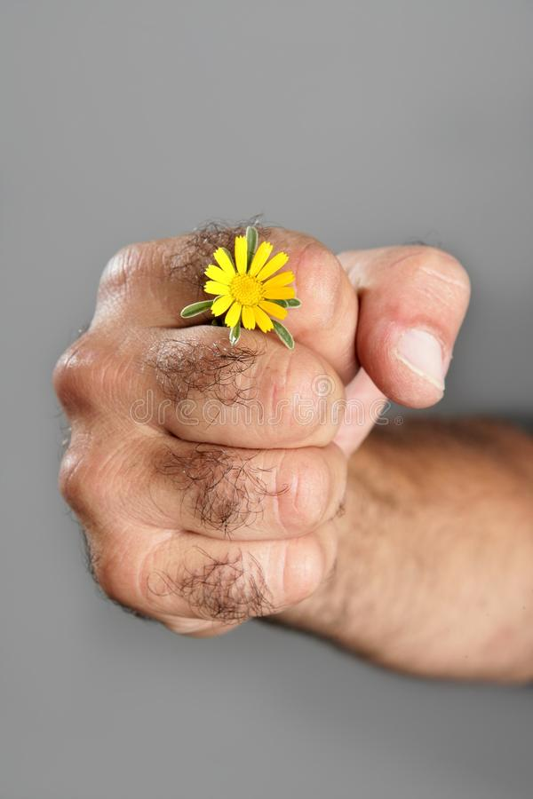 Download Concept And Contrast Of Hairy Man Hand And Flower Stock Image - Image: 11057489