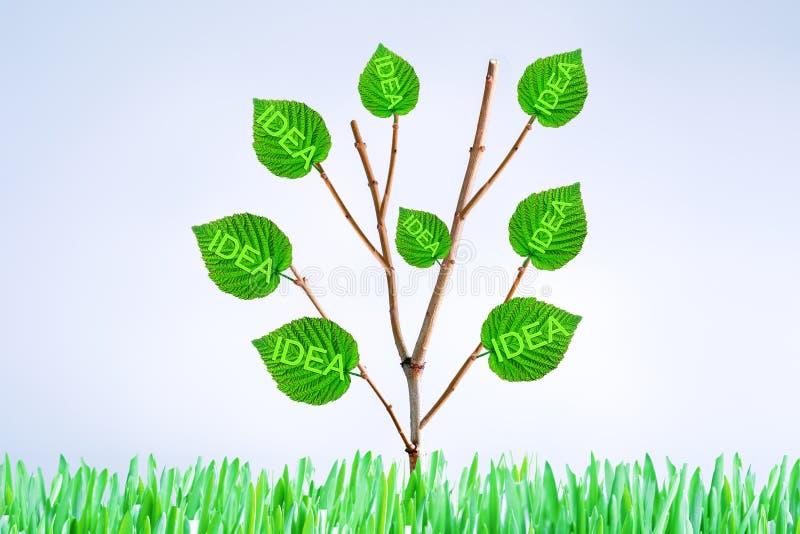 Concept croissant Usine ou arbre avec les feuilles vertes sur le fond gris avec l'espace de copie Concept cr?atif de nouvelle id? photos libres de droits