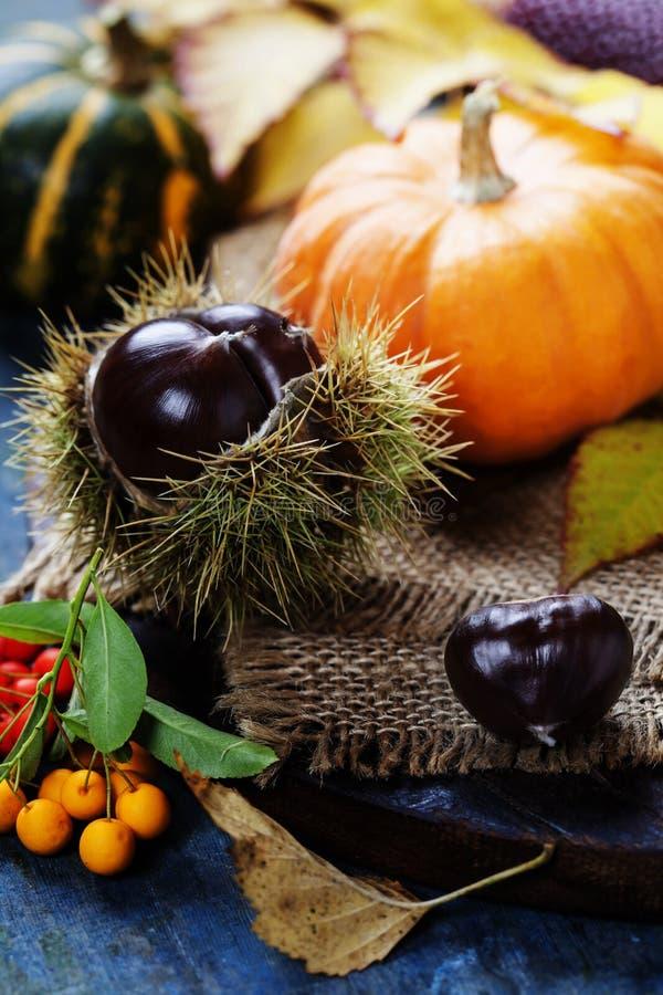 Concept d'automne avec les fruits et légumes saisonniers photos stock