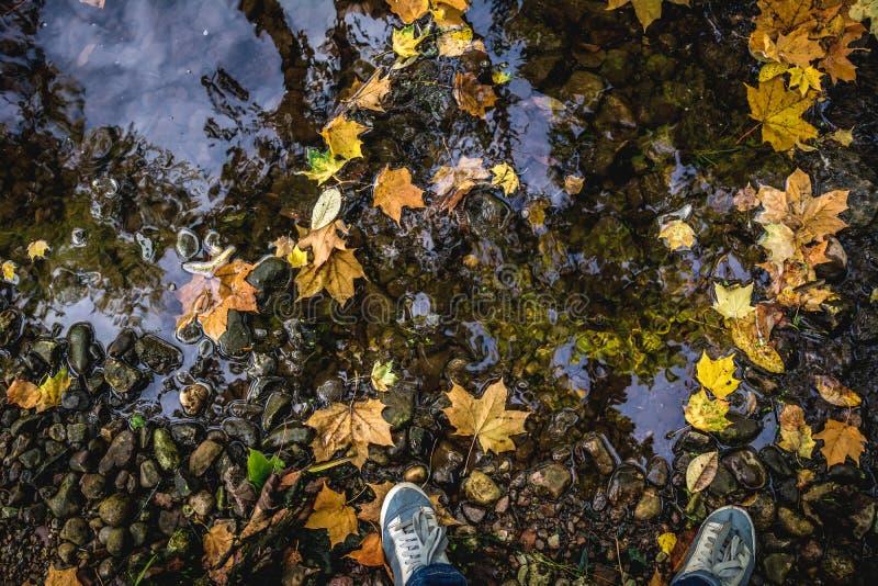 Concept d'Autumn Fall - malaxez avec des bottes et des feuilles image libre de droits