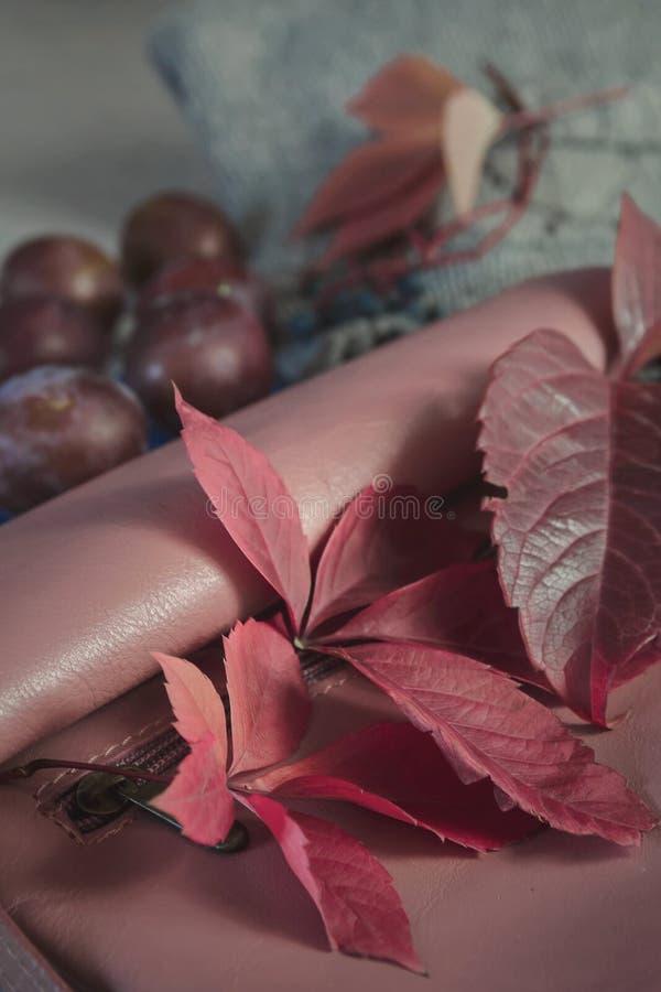 Concept d'hiver ou d'automne dans des couleurs de Bourgogne de chute Détails de la vie, embrayage de sac à main, feuille d'érable photos stock