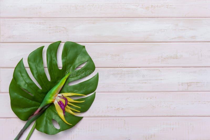 Concept d'id?es d'?t? avec la fronti?re tropicale de cadre de feuille sur le fond en bois en pastel de rose avec l'espace d'exemp image stock