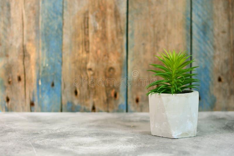 Concept d'intérieur de style de flore et de grenier Plante d'intérieur simple sur un contexte en bois image libre de droits