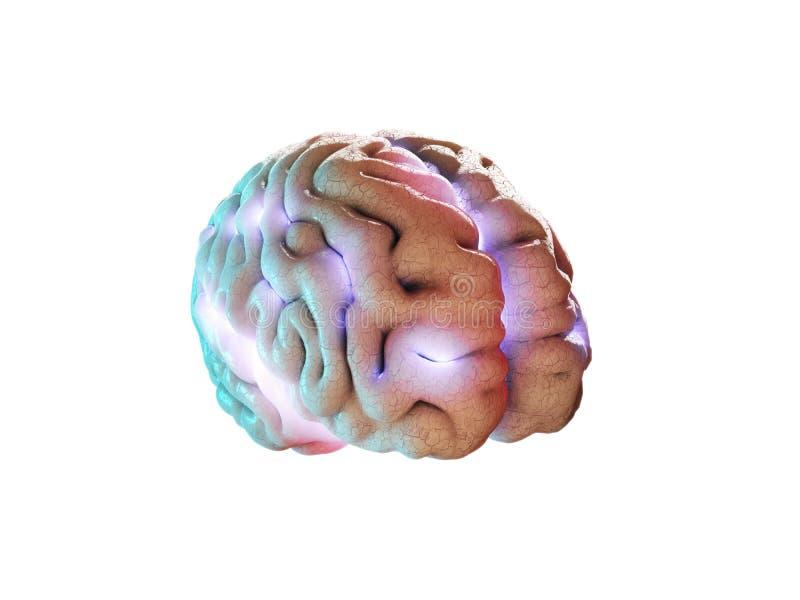 Concept d'intelligence humaine avec l'esprit humain sur le fond blanc, illustration 3d illustration libre de droits