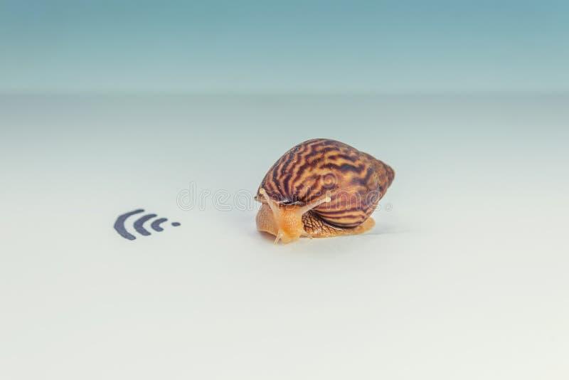 Concept d'Internet, d'escargot et de wifi lents photos libres de droits