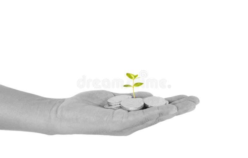 Concept d'investissement avec la jeune usine et les pièces de monnaie image stock