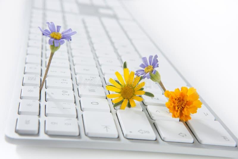 Concept dat bloemen van computer groeit royalty-vrije stock afbeeldingen